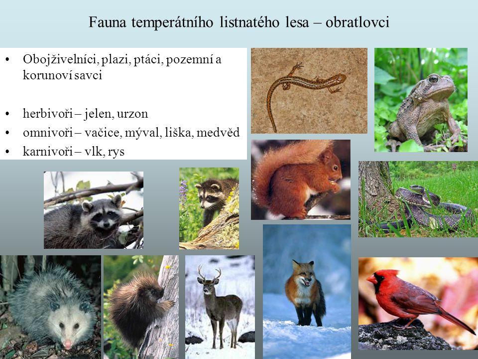 Fauna temperátního listnatého lesa – obratlovci