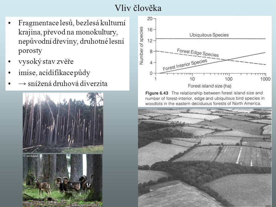 Vliv člověka Fragmentace lesů, bezlesá kulturní krajina, převod na monokultury, nepůvodní dřeviny, druhotné lesní porosty.