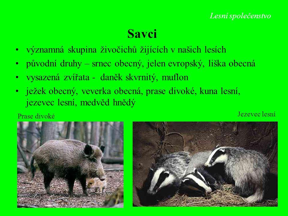 Savci významná skupina živočichů žijících v našich lesích