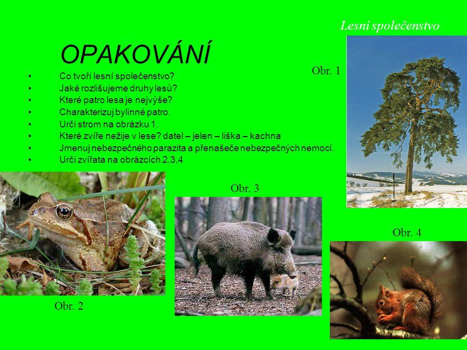 Lesní společenstvo Obr. 1 Obr. 3 Obr. 4 Obr. 2 OPAKOVÁNÍ