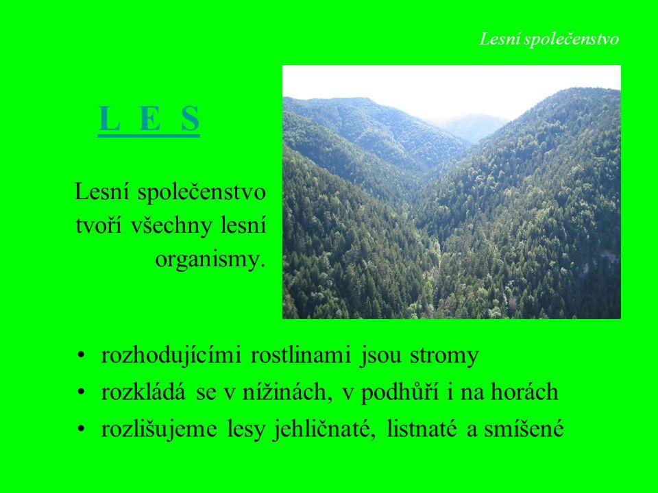 L E S Lesní společenstvo tvoří všechny lesní organismy.