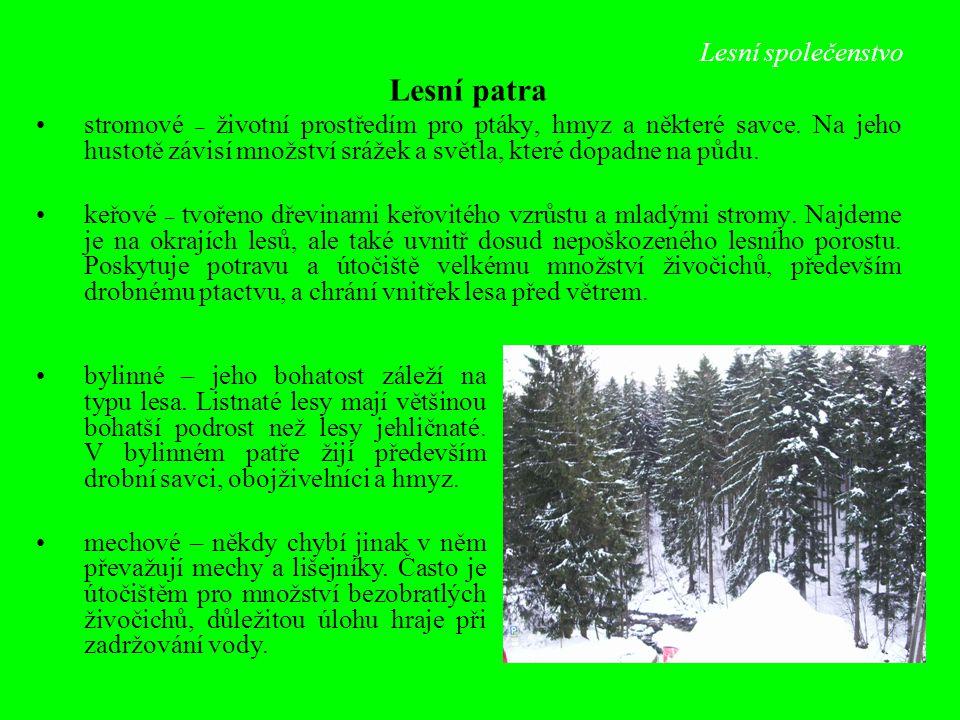 Lesní patra Lesní společenstvo