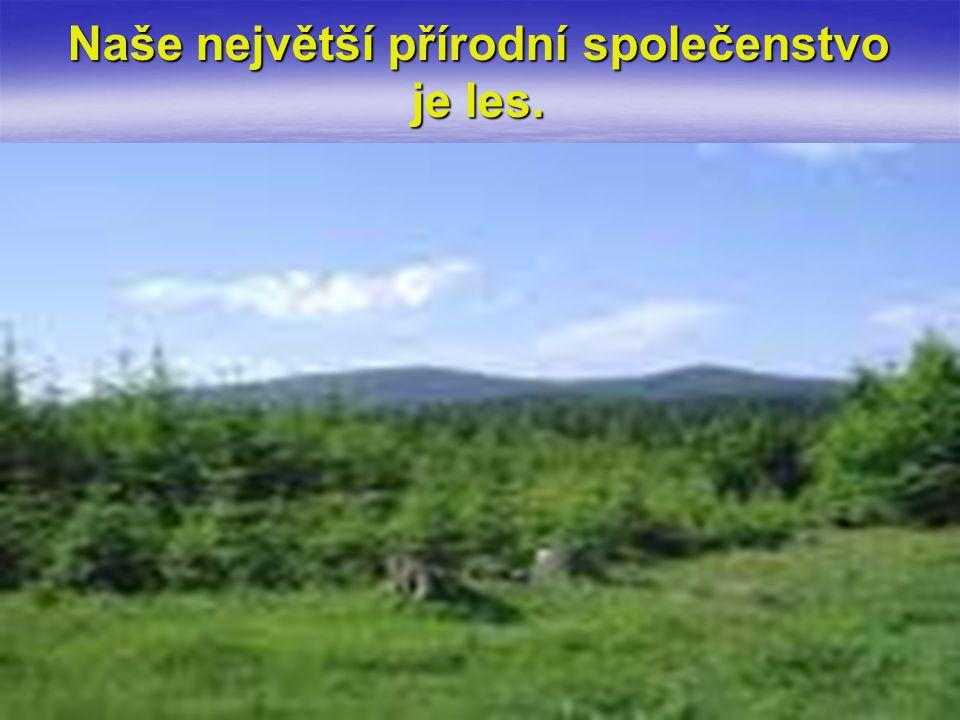 Naše největší přírodní společenstvo je les.