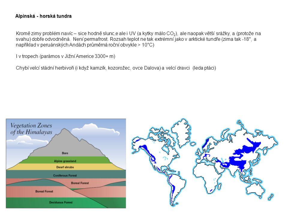 Alpinská - horská tundra