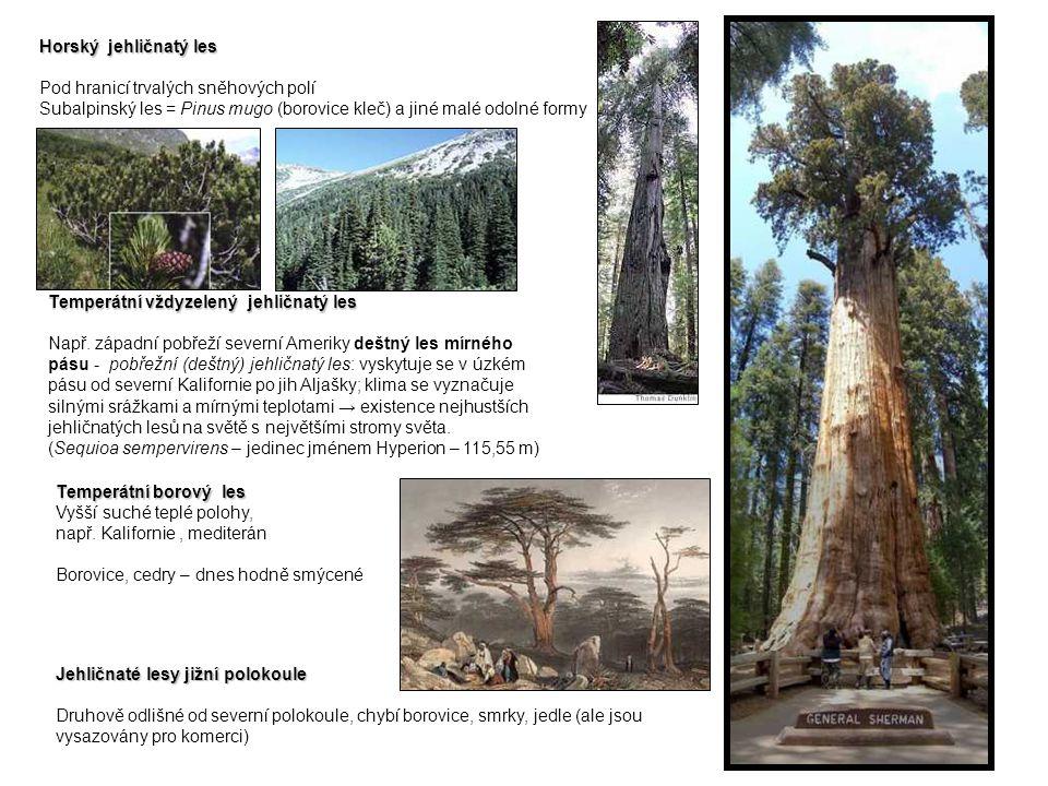 Horský jehličnatý les Pod hranicí trvalých sněhových polí. Subalpinský les = Pinus mugo (borovice kleč) a jiné malé odolné formy.
