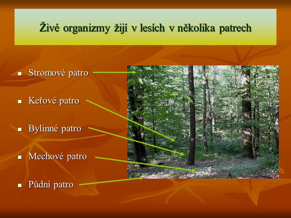 Živé organizmy žijí v lesích v několika patrech