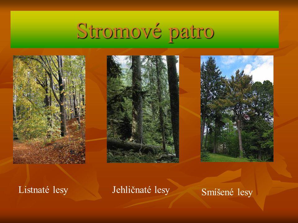 Stromové patro Listnaté lesy Jehličnaté lesy Smíšené lesy