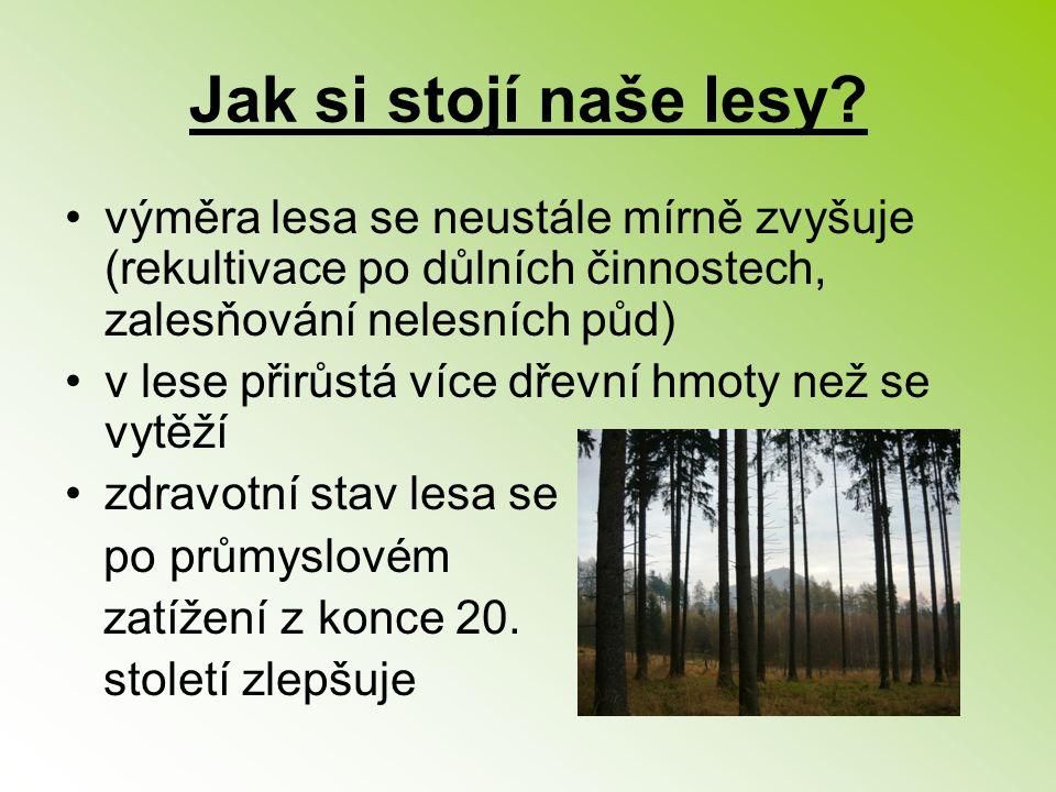 Jak si stojí naše lesy výměra lesa se neustále mírně zvyšuje (rekultivace po důlních činnostech, zalesňování nelesních půd)