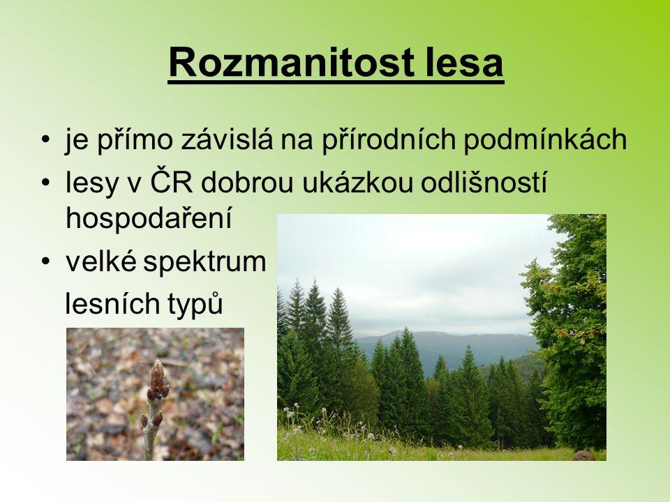 Rozmanitost lesa je přímo závislá na přírodních podmínkách