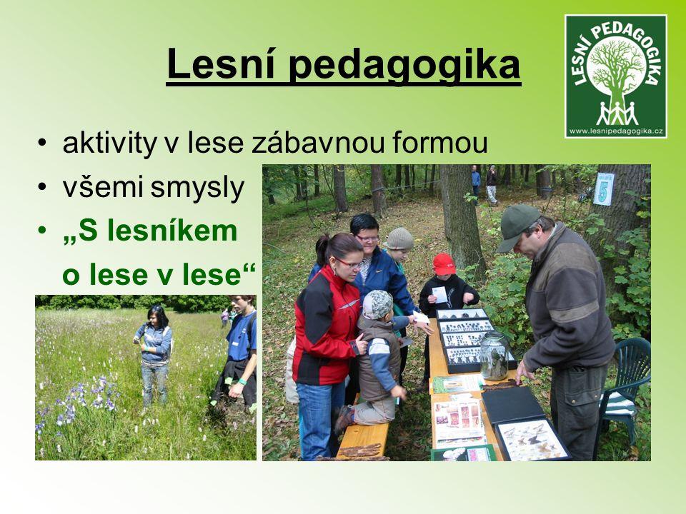 Lesní pedagogika aktivity v lese zábavnou formou všemi smysly