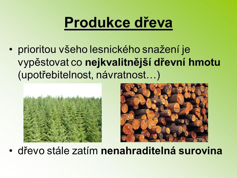 Produkce dřeva prioritou všeho lesnického snažení je vypěstovat co nejkvalitnější dřevní hmotu (upotřebitelnost, návratnost…)