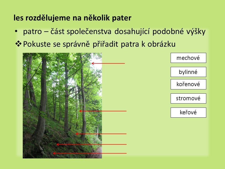 les rozdělujeme na několik pater
