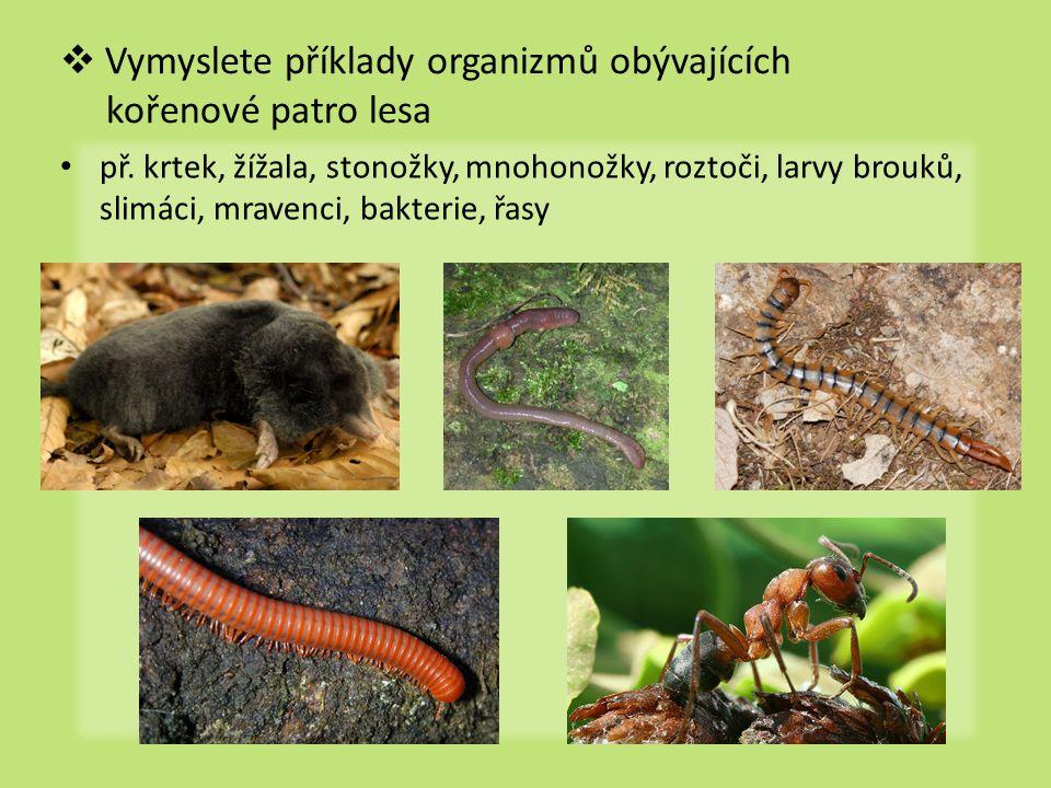 Vymyslete příklady organizmů obývajících kořenové patro lesa