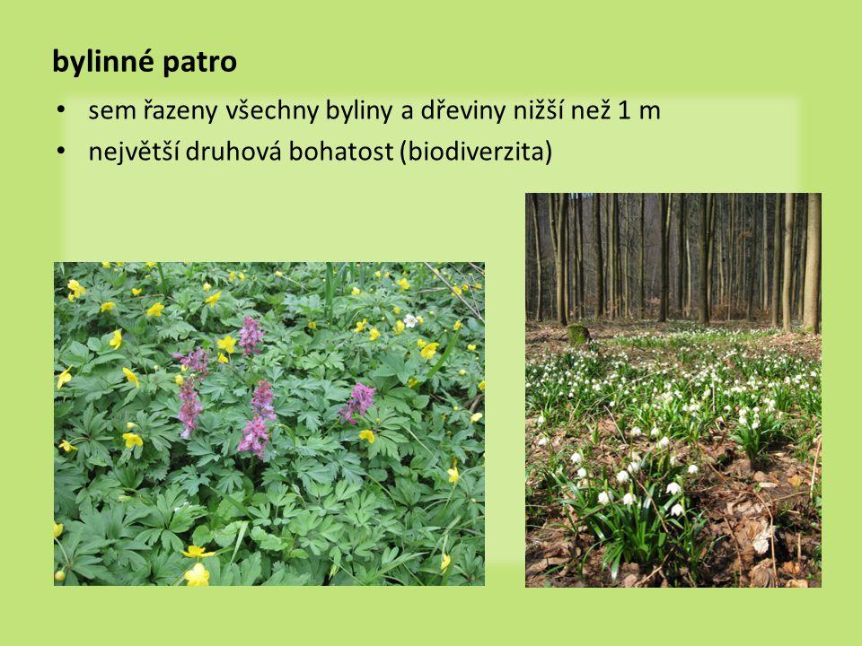 bylinné patro sem řazeny všechny byliny a dřeviny nižší než 1 m