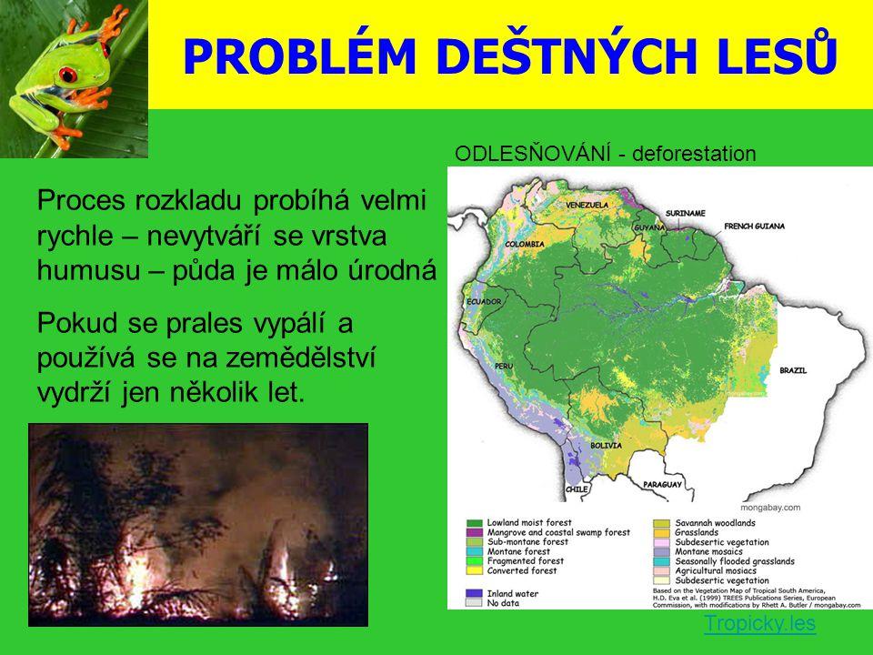 PROBLÉM DEŠTNÝCH LESŮ ODLESŇOVÁNÍ - deforestation. Proces rozkladu probíhá velmi rychle – nevytváří se vrstva humusu – půda je málo úrodná.