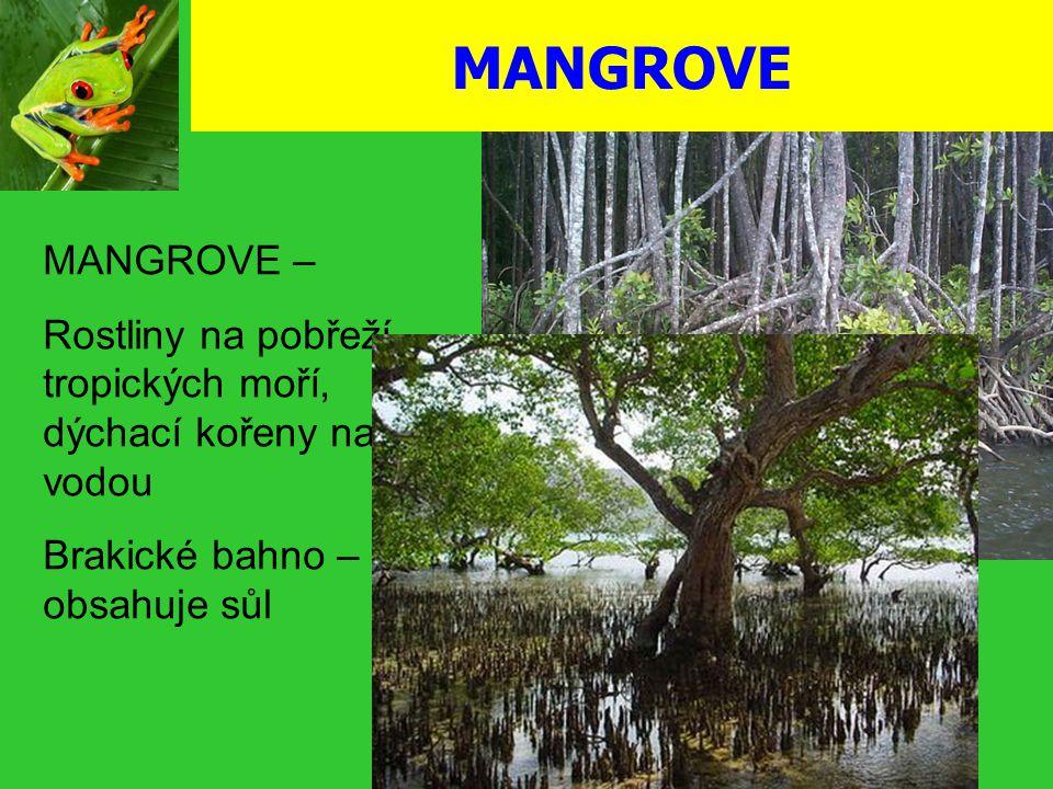 MANGROVE MANGROVE – Rostliny na pobřeží tropických moří, dýchací kořeny nad vodou.
