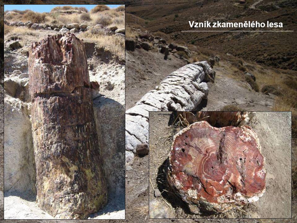Vznik zkamenělého lesa