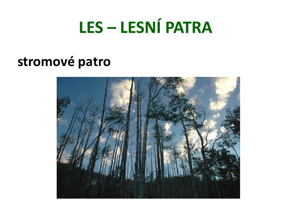 LES – LESNÍ PATRA stromové patro