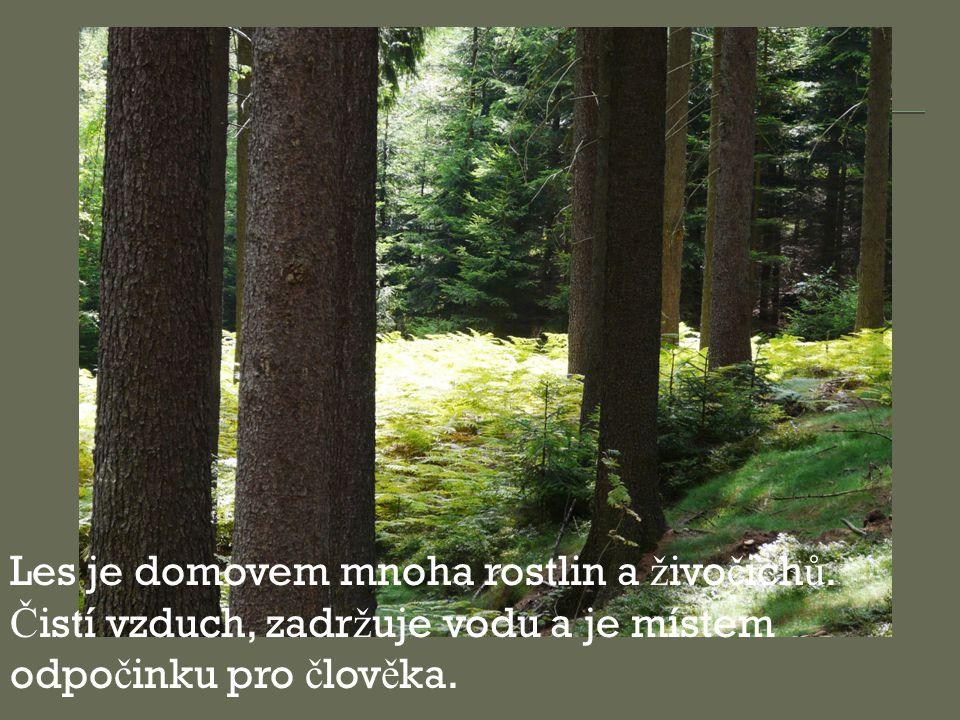 Les je domovem mnoha rostlin a živočichů