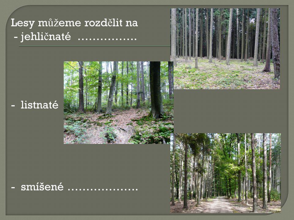 Lesy můžeme rozdělit na