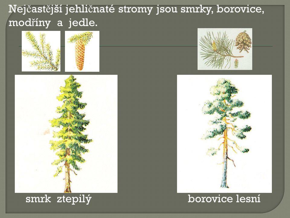 Nejčastější jehličnaté stromy jsou smrky, borovice, modříny a jedle