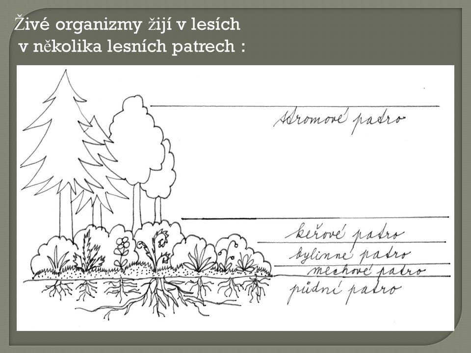 Živé organizmy žijí v lesích v několika lesních patrech :