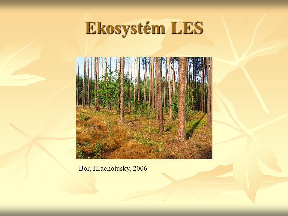 Ekosystém LES Bor, Hracholusky, 2006