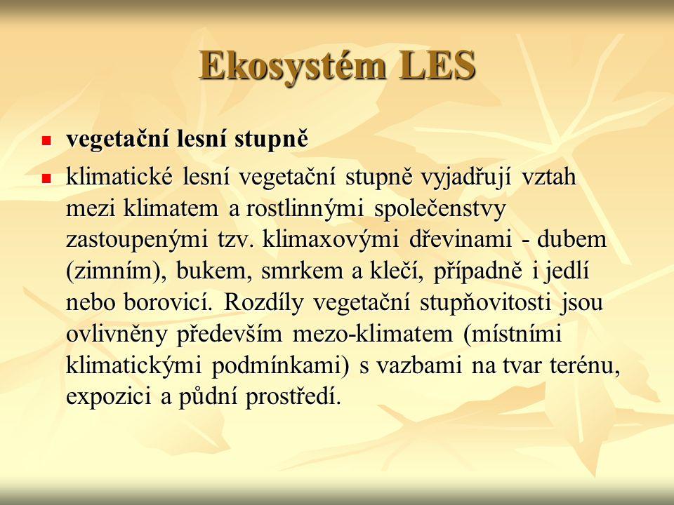 Ekosystém LES vegetační lesní stupně