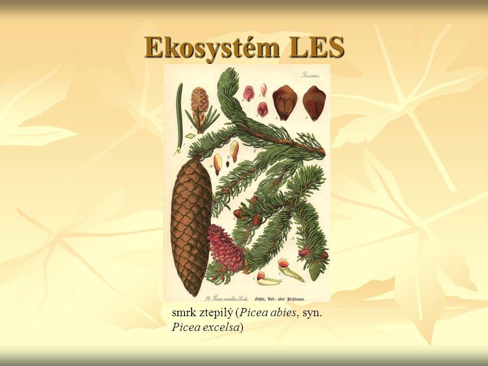 Ekosystém LES smrk ztepilý (Picea abies, syn. Picea excelsa)