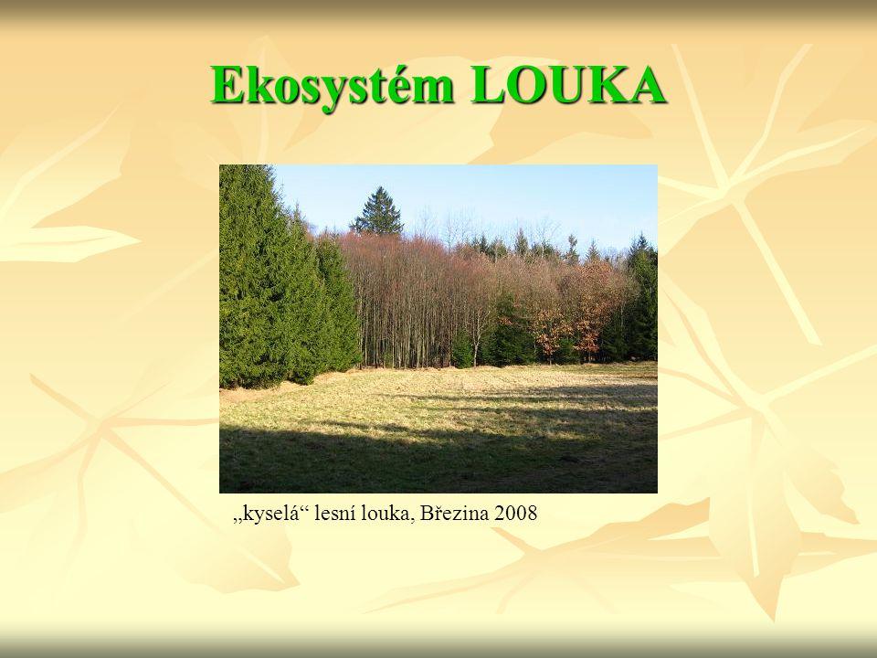 """Ekosystém LOUKA """"kyselá lesní louka, Březina 2008"""
