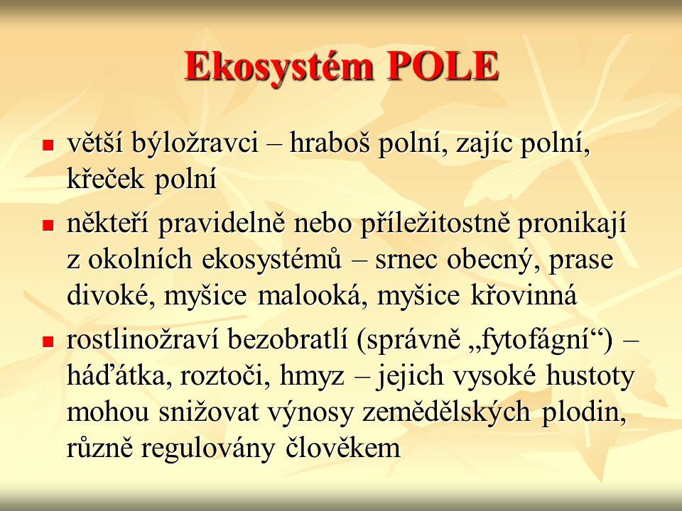 Ekosystém POLE větší býložravci – hraboš polní, zajíc polní, křeček polní.
