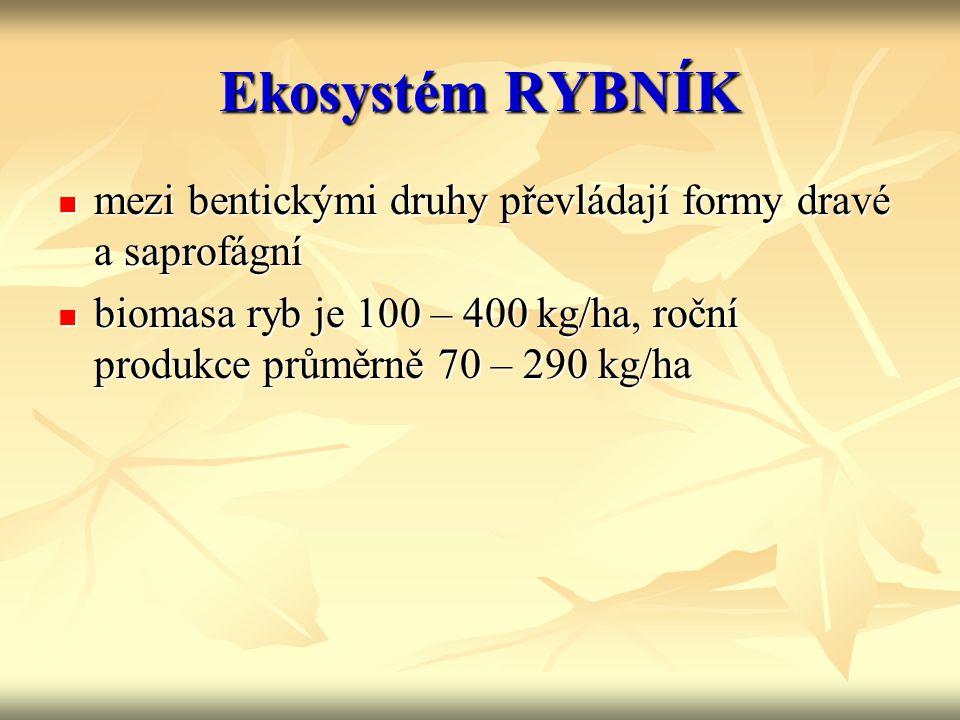 Ekosystém RYBNÍK mezi bentickými druhy převládají formy dravé a saprofágní.