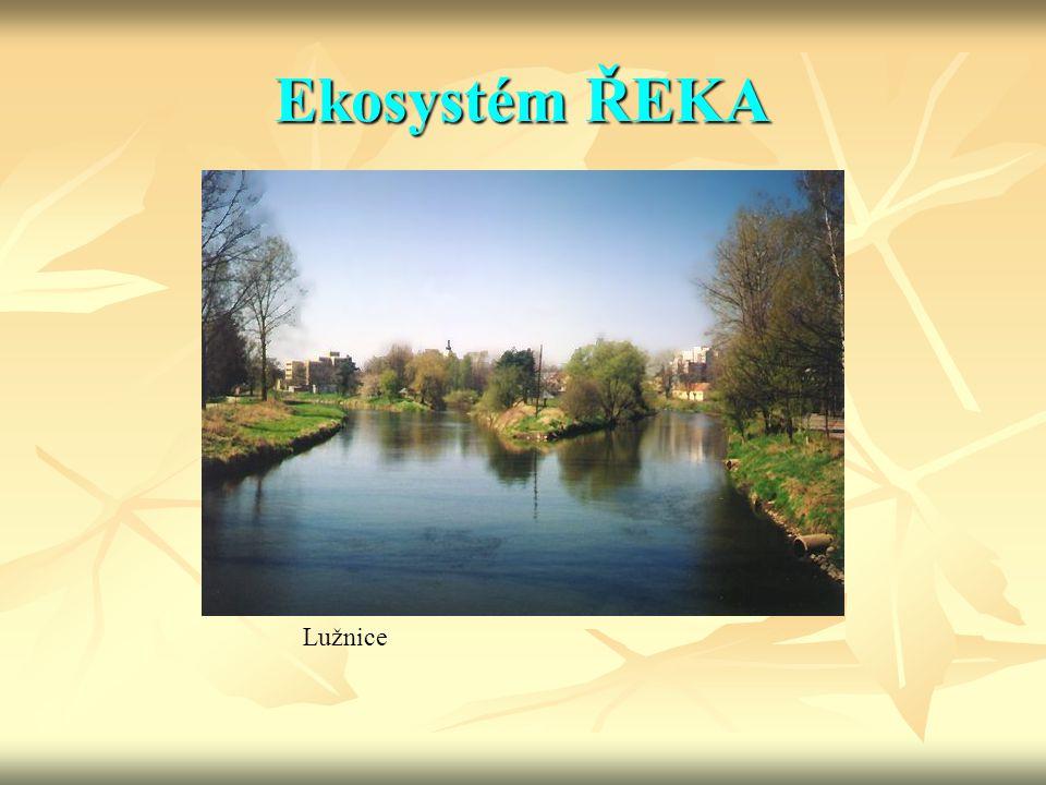 Ekosystém ŘEKA Lužnice