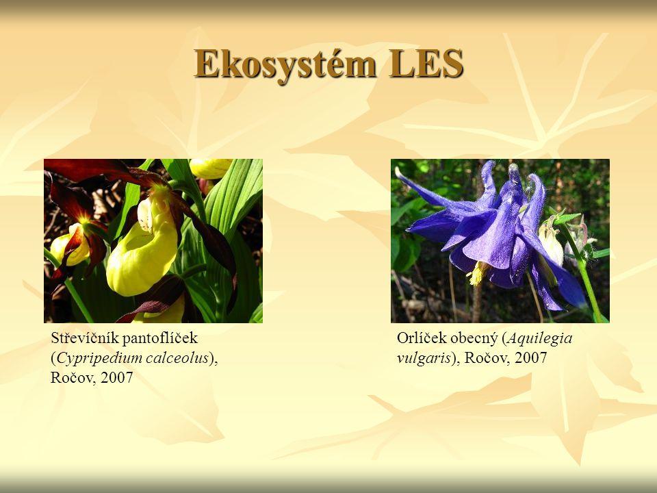Ekosystém LES Střevíčník pantoflíček (Cypripedium calceolus), Ročov, 2007.