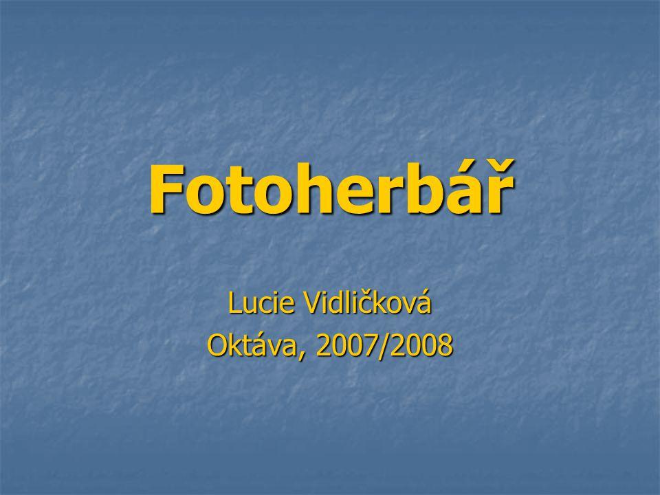 Lucie Vidličková Oktáva, 2007/2008