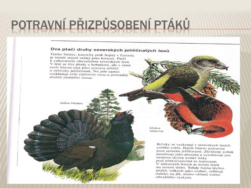 Potravní přizpůsobení ptáků