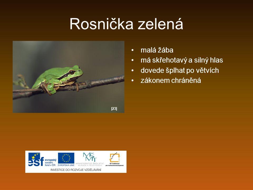Rosnička zelená malá žába má skřehotavý a silný hlas