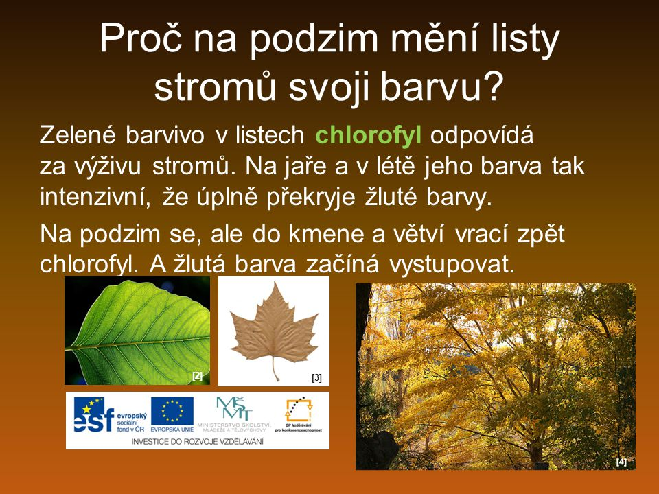 Proč na podzim mění listy stromů svoji barvu