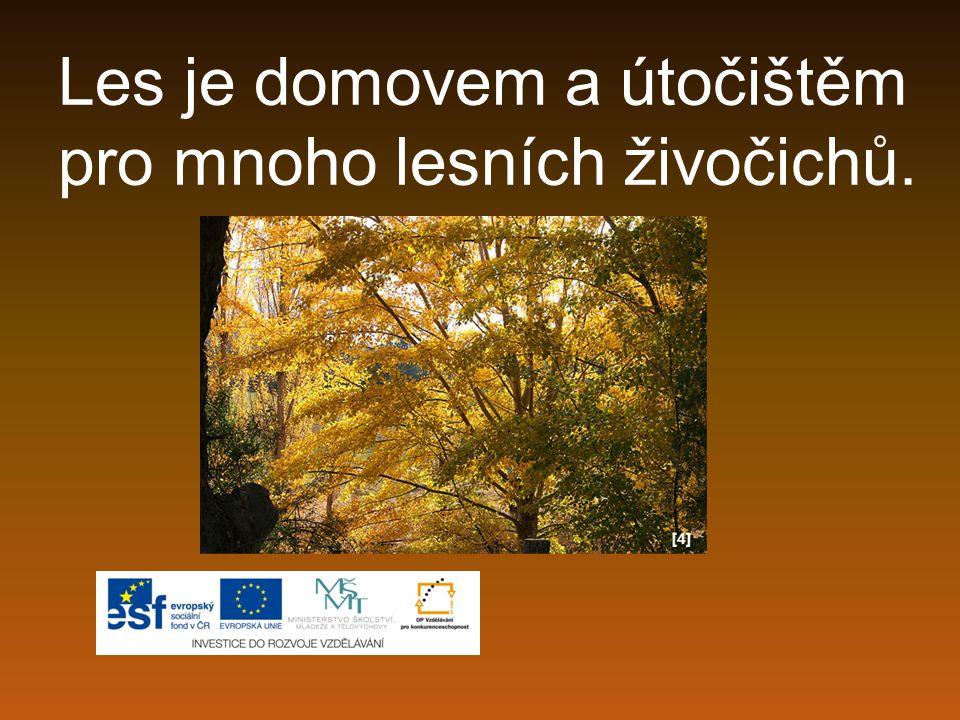 Les je domovem a útočištěm pro mnoho lesních živočichů.