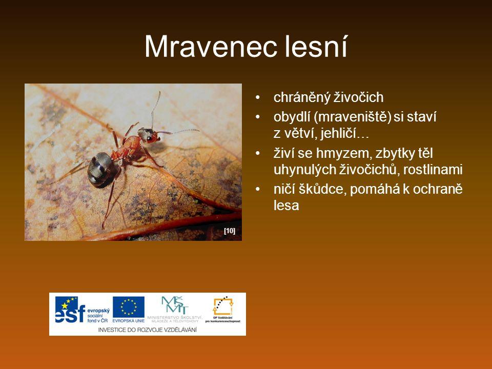 Mravenec lesní chráněný živočich