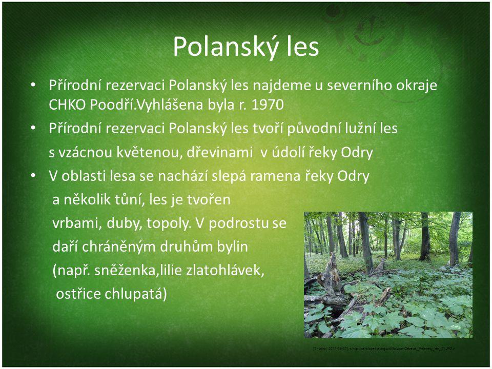 Polanský les Přírodní rezervaci Polanský les najdeme u severního okraje CHKO Poodří.Vyhlášena byla r. 1970.