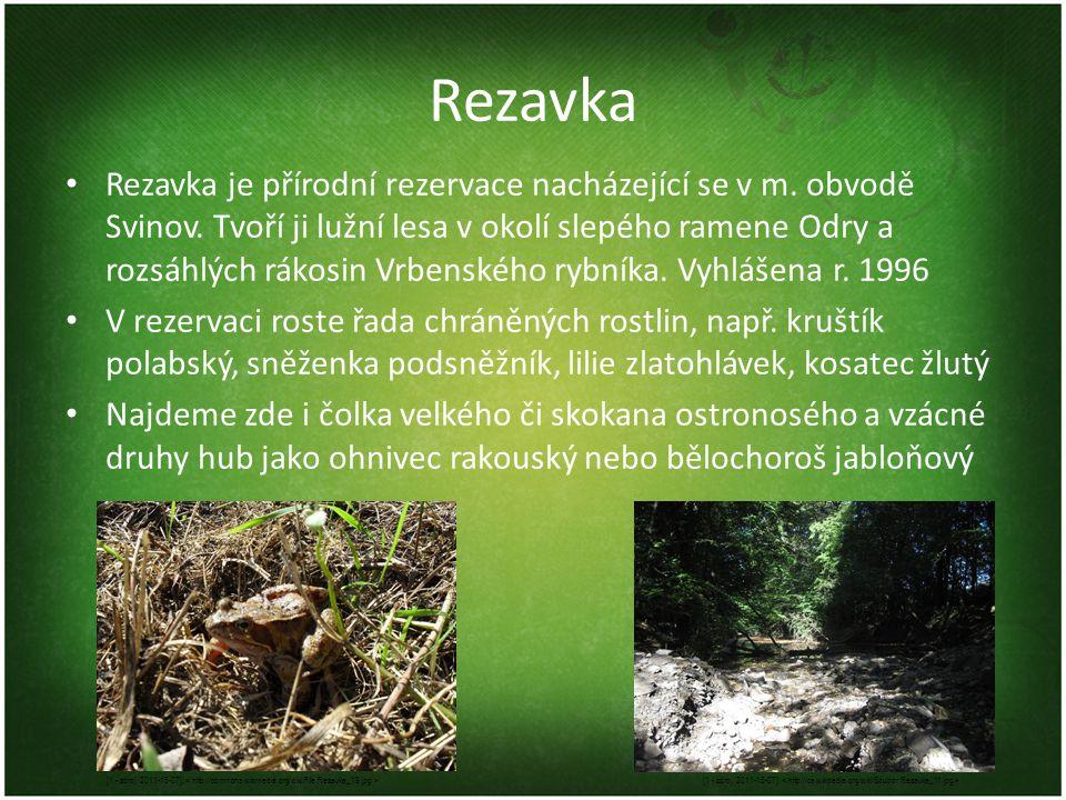 Rezavka