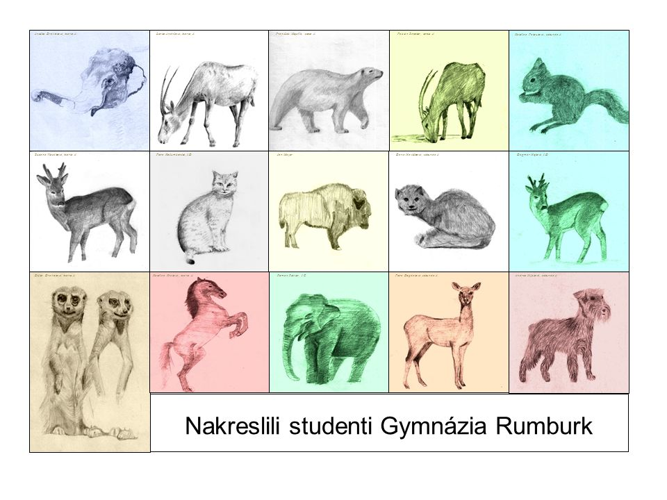 Nakreslili studenti Gymnázia Rumburk