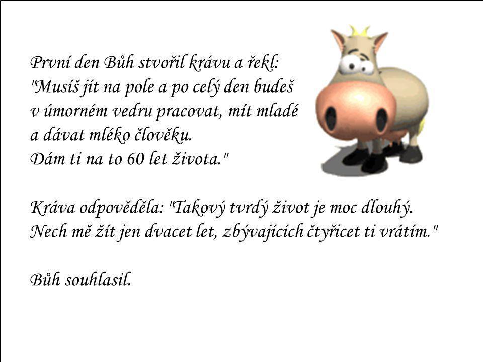 První den Bůh stvořil krávu a řekl: