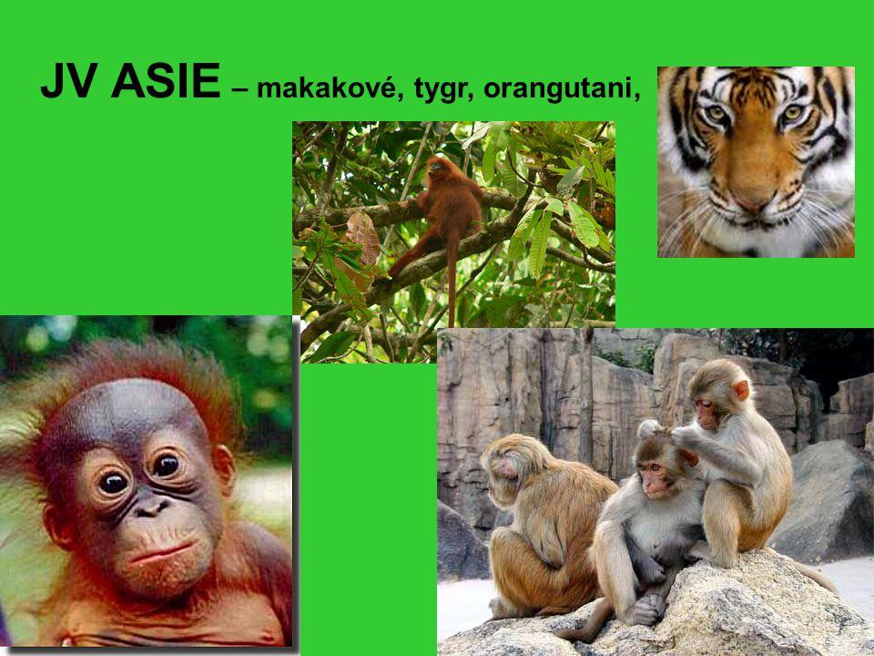 JV ASIE – makakové, tygr, orangutani,
