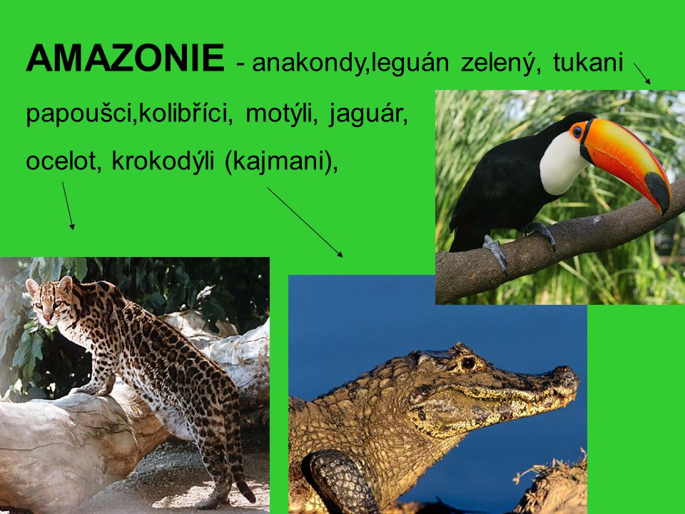 AMAZONIE - anakondy,leguán zelený, tukani