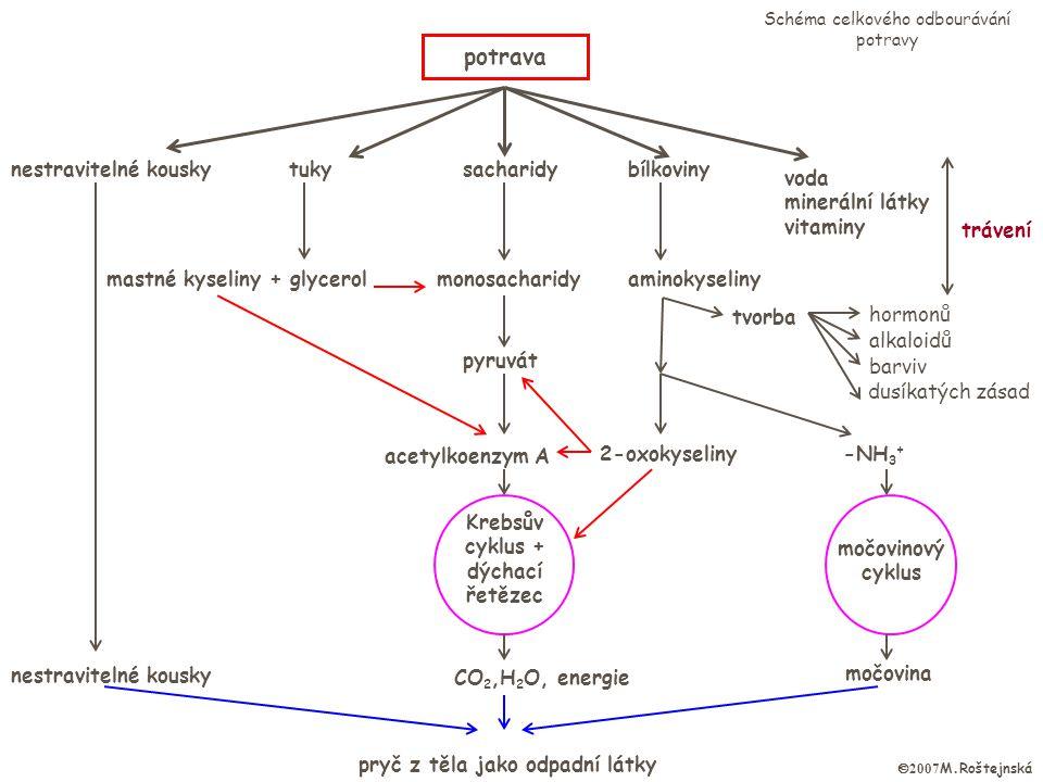 Krebsův cyklus + dýchací řetězec