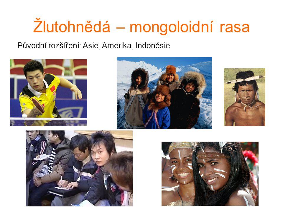 Žlutohnědá – mongoloidní rasa