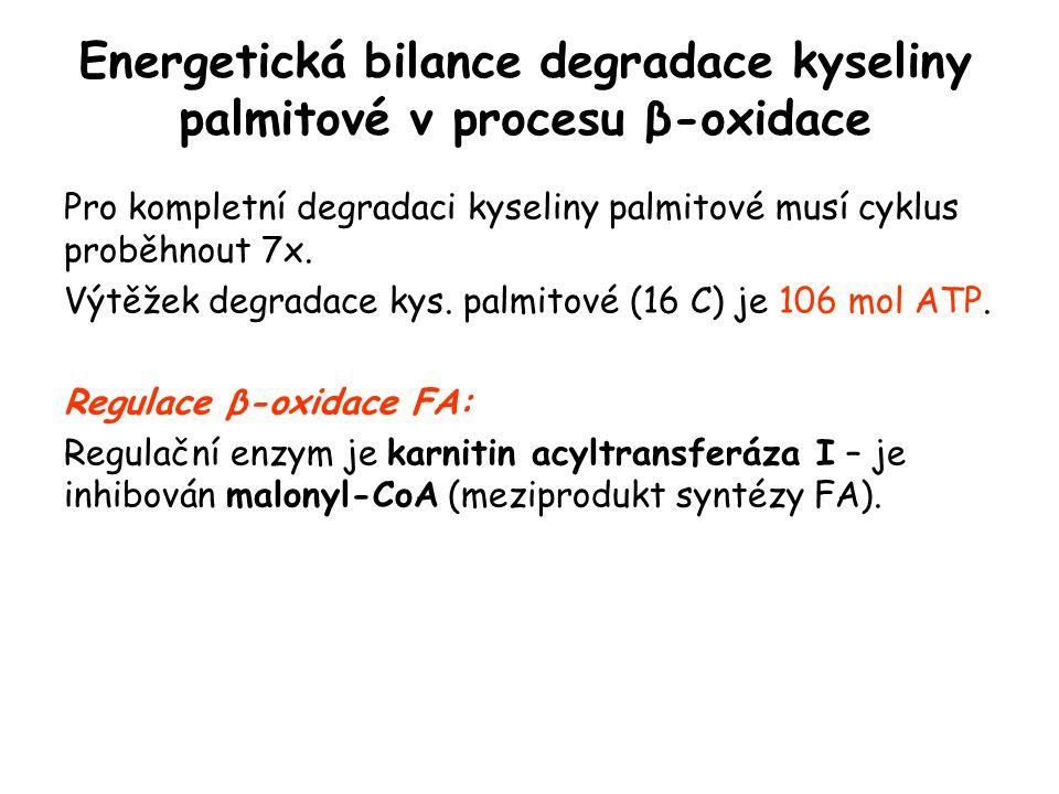 Energetická bilance degradace kyseliny palmitové v procesu β-oxidace
