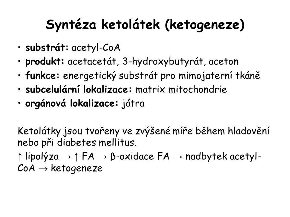 Syntéza ketolátek (ketogeneze)